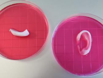 El sueño de los órganos creados por bioimpresoras 3D, un paso más cerca