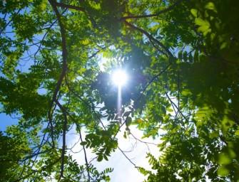 ¿Pueden crecer los iPhone en un árbol? Responde la nanobiofísica