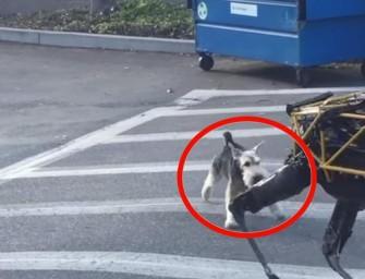 Un valiente perro impide la invasión de las máquinas
