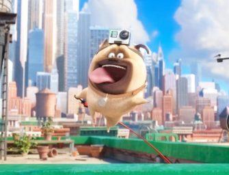 Así ven el mundo las mascotas con una GoPro