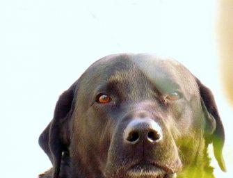 Un grupo de investigadores emulan la nariz del perro para detectar explosivos